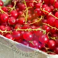 Brandy Currant Fragrance for Rainbow and RainMate