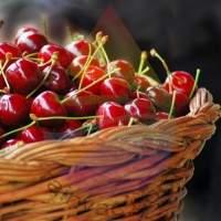 Cherry Fragrance for Rainbow and RainMate