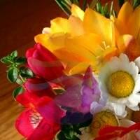 Floral Fragrance for Rainbow & RainMate