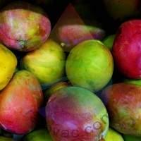 Mango Fragrance for Rainbow & RainMate