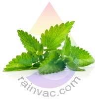 Mint Fragrance for Rainbow & RainMate