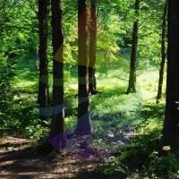 Northern Woods Fragrance for Rainbow & RainMate