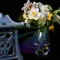 Oriental Bouquet Fragrance for Rainbow & RainMate