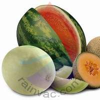 Summer Melons Fragrance for Rainbow & RainMate