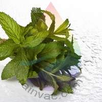Spearmint Fragrance for Rainbow & RainMate