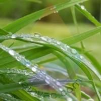 Spring Rain Fragrance for Rainbow & RainMate