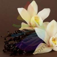 Vanilla Fragrance for Rainbow & RainMate